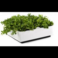 Goede growshop online